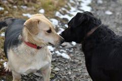 Cão e gato que joga junto como melhores amigos Imagem de Stock Royalty Free