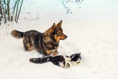 Cão e gato que joga na neve foto de stock