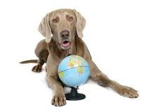 Cão e globo imagens de stock royalty free