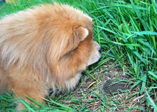 Cão e hedgehog espinhoso Foto de Stock Royalty Free