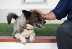 Cão e homem Fotos de Stock Royalty Free