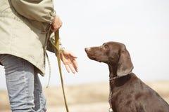 Cão e instrutor Fotografia de Stock Royalty Free