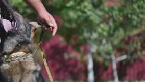 Cão e instrutor na jarda video estoque