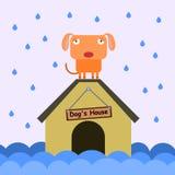 Cão e inundação Fotos de Stock Royalty Free
