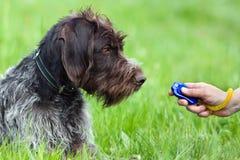 Cão e mão de caça com clicker Fotografia de Stock