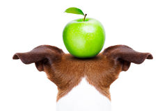 Cão e maçã fotografia de stock royalty free