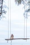Cão e mar longos do cabelo imagens de stock