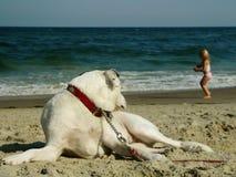 Cão e menina na praia Fotografia de Stock Royalty Free