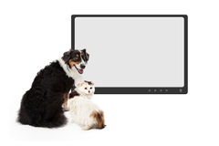 Cão e monitor de Cat In Front Of Blank fotografia de stock