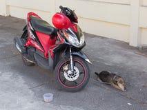 Cão e motocicleta imagens de stock royalty free