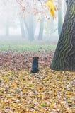 Cão e névoa do outono Fotografia de Stock