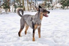 Cão e neve Foto de Stock