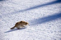 Cão e a neve Fotografia de Stock
