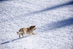 Cão e a neve Fotos de Stock