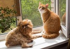 Cão e o gato na janela Fotos de Stock Royalty Free