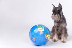 Cão e o globo Fotografia de Stock Royalty Free