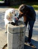 Cão e o proprietário na fonte bebendo Fotos de Stock