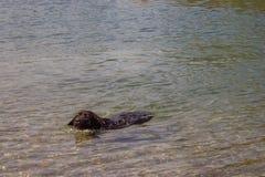 Cão e o rio Imagem de Stock Royalty Free