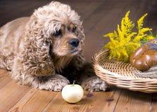 Cão e pequeno almoço imagens de stock