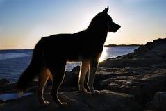 Cão e por do sol fotografia de stock royalty free