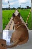 Cão e povos do observador na ponte de madeira longa Imagens de Stock