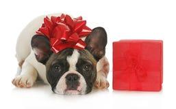 Cão e presente Fotografia de Stock Royalty Free