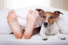 Cão e proprietário do sono Fotografia de Stock