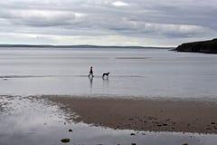 Cão e proprietário na praia de Orkney foto de stock