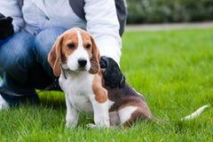 Cão e ser humano na grama verde fotografia de stock