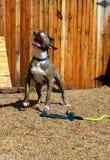 Cão e sistema de extinção de incêndios do gramado Fotos de Stock