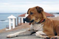 Cão e templo budista Fotos de Stock Royalty Free