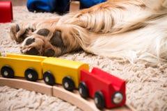 Cão e trem Fotos de Stock