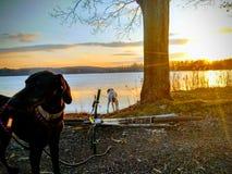 Cão e 'trotinette' perto do lago imagens de stock royalty free