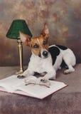 Cão e um livro aberto Fotos de Stock