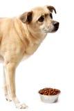 Cão e uma bacia de alimento Foto de Stock
