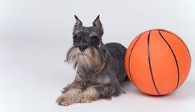 Cão e uma esfera do basquetebol Fotos de Stock Royalty Free