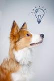 Cão e uma ideia imagens de stock royalty free