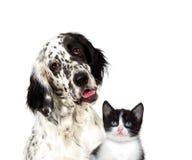 Cão e uma vista do gatinho Imagem de Stock Royalty Free
