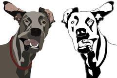 Cão e vento Imagens de Stock