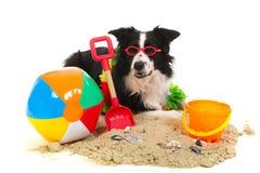 Cão em férias Fotos de Stock