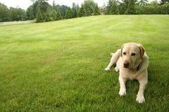 Cão em repouso Imagens de Stock Royalty Free