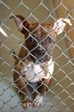 Cão em um abrigo animal Fotos de Stock Royalty Free