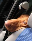 Cão em um carro Fotografia de Stock Royalty Free