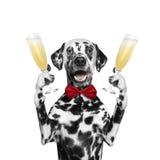 Cão em um feriado com um vidro do champanhe Fotos de Stock