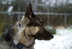 Cão em um jardim nevado Fotografia de Stock Royalty Free