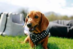 Cão em um parque Fotos de Stock