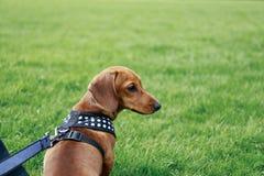 Cão em um parque Foto de Stock