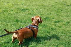 Cão em um parque Imagens de Stock Royalty Free