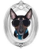 Cão em um quadro Foto de Stock Royalty Free