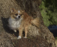 Cão em um ree fotografia de stock royalty free